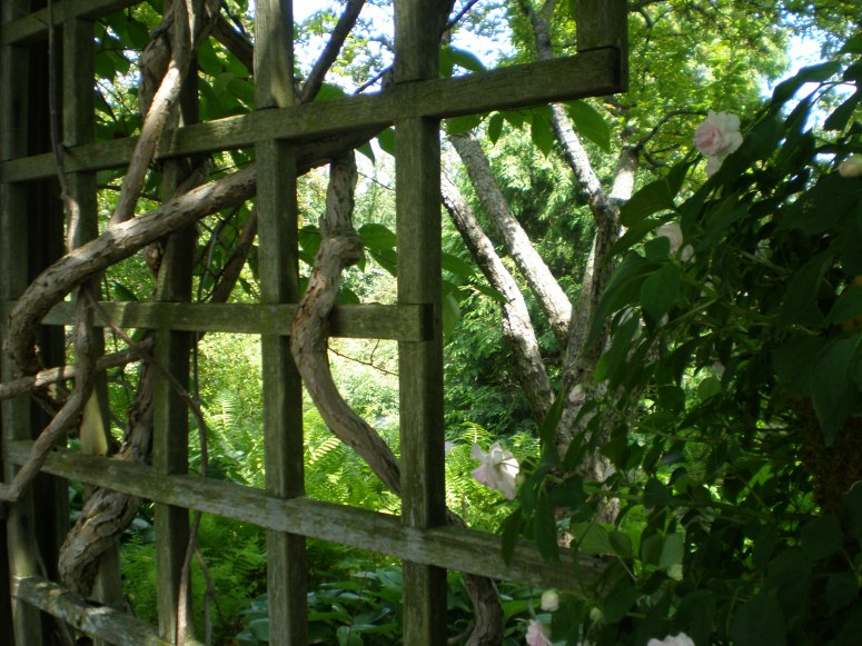 Heavy vines and tree branches