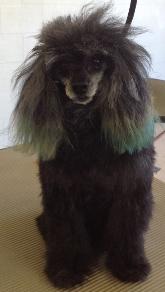 Vicious Beast after blow dry