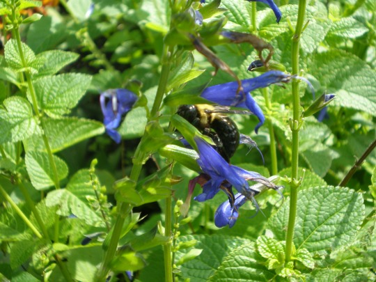 Bee/flower