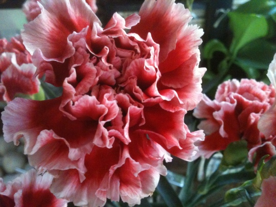 Yes, more carnations