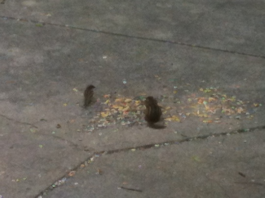 Chipmunk & sparrow