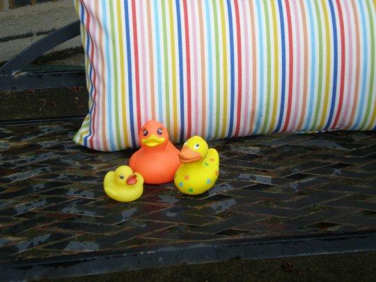 The ducks...