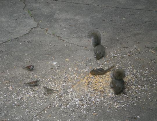 Birds, squirrels and a chipmunk