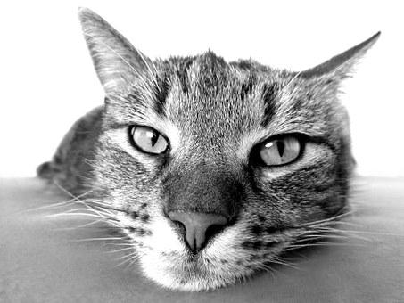 cat-98359__340