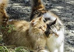cat-1259163__180