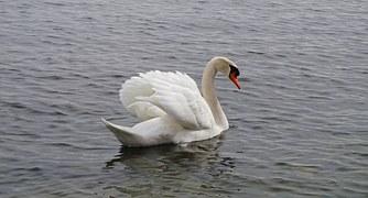waterbirds-1254801__180