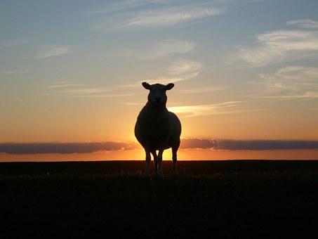 sunset-50494__340