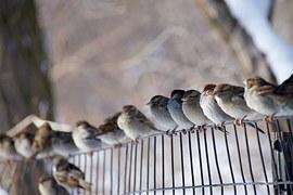 birds-1209541__180