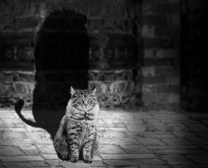 cat-564202__340