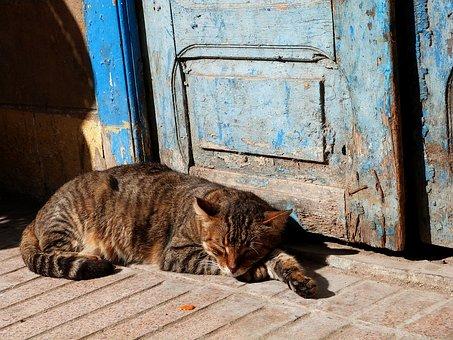 cat-1865263__340