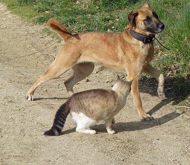 dog-cat-1721211__340