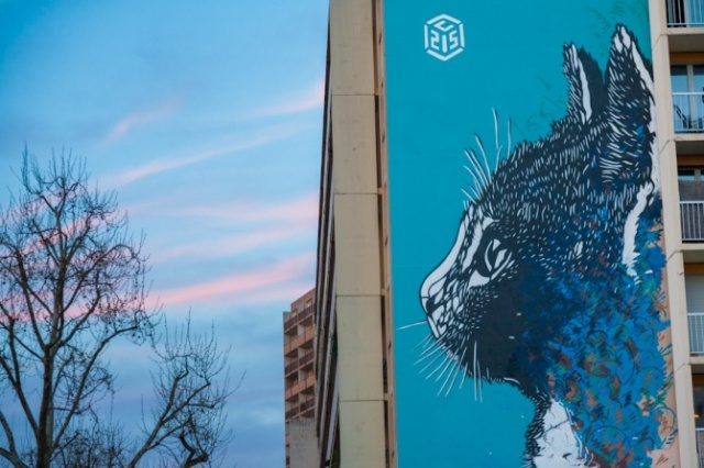 Cat by C215 in Paris13